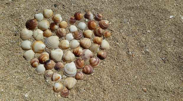 heart shape sea shells on brown beach sand